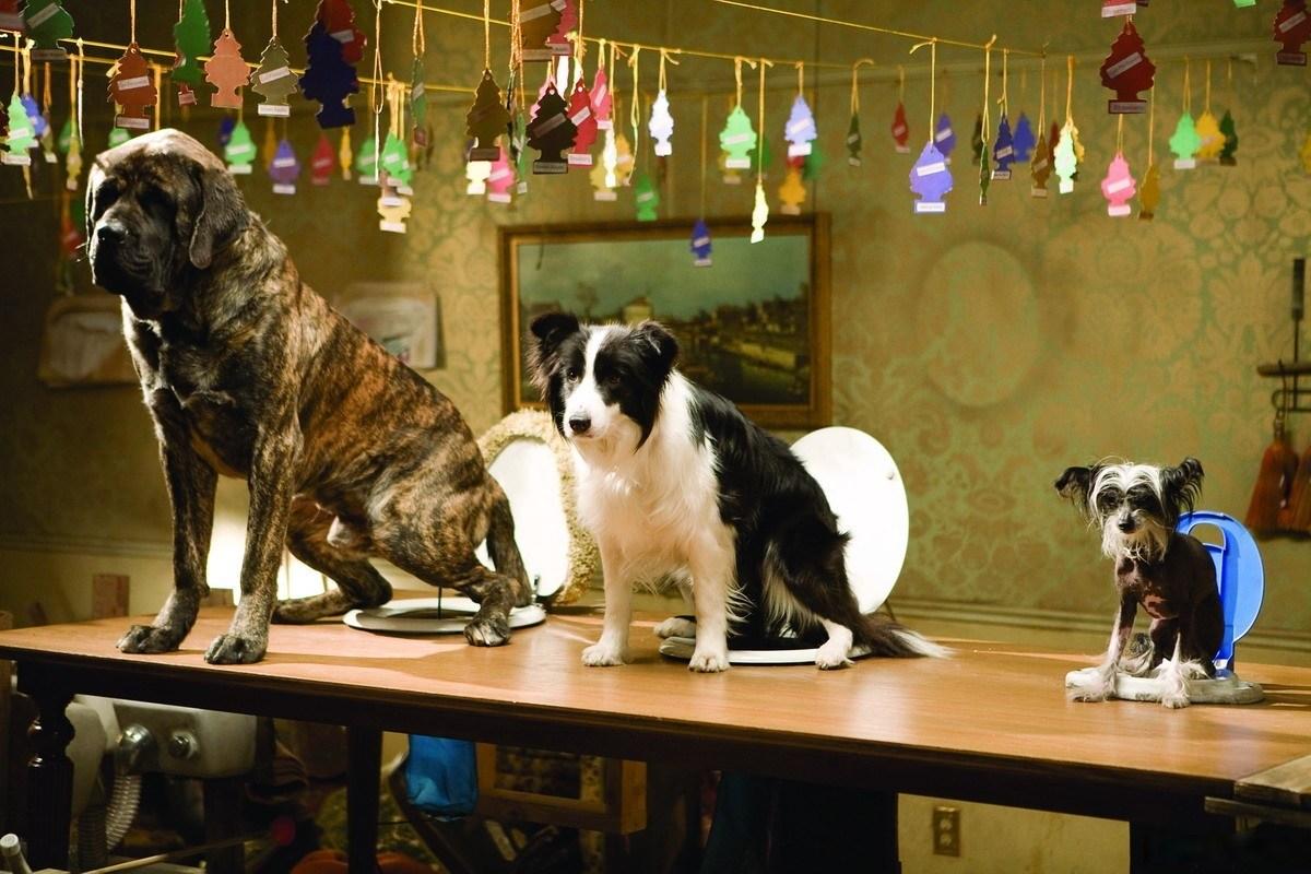 подборка картинки отель для собак есть
