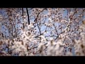 Свiчадо - 19/03/17