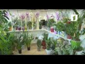 Как правильно ухаживать за орхидеями / Утренний эфир